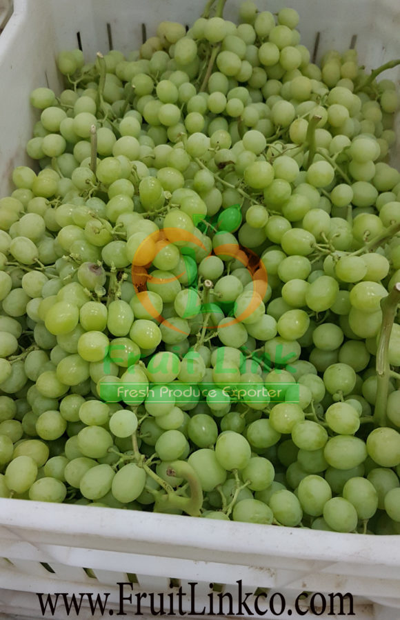 Early sweet grapes - best selecting - by Fruit Link