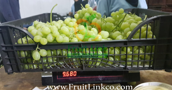 Early sweet grapes by Fruit Link