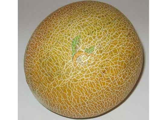 Egyptian Gallia Melon