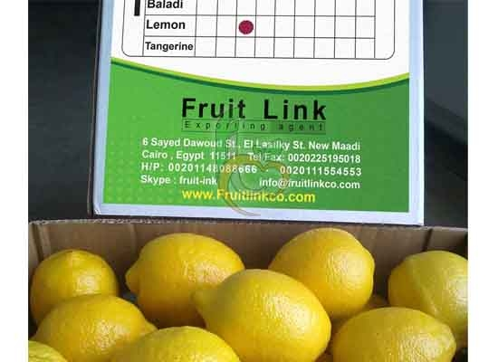 Fresh Citrus Adallia Lemon