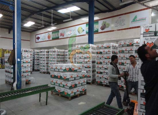 Packing line of Egyptian Citrus packing
