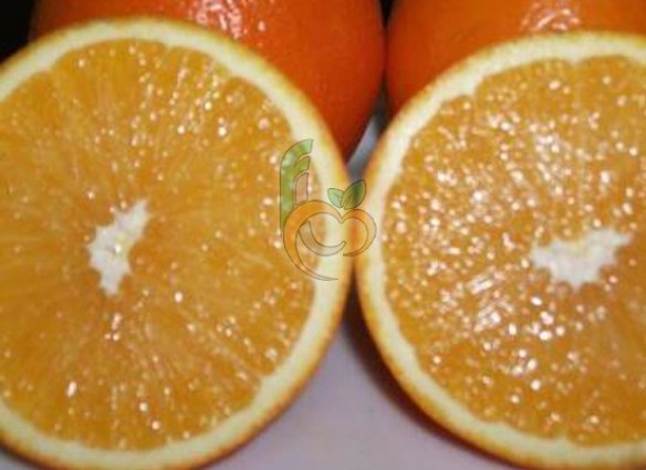 Fresh Navel Orange from Egypt and its flesh