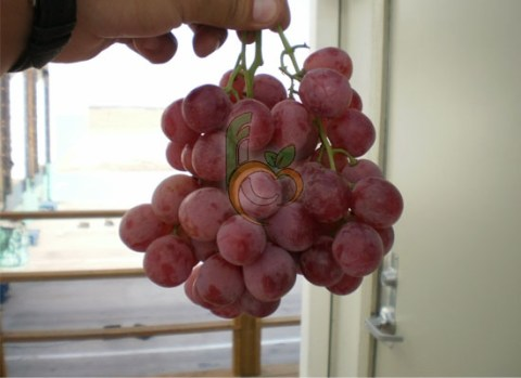 Fresh Red Globe Grapes Produce