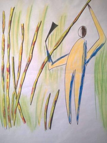 sugar-cane-farmer-in-field