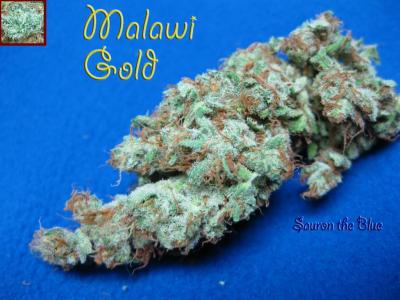Malawi Gold smoke report