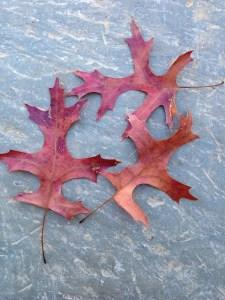 My oak leaf inspirations