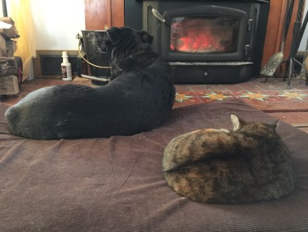 Frieda and Flo by the wood stove
