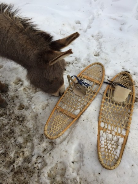 Fanny and my snow shoes