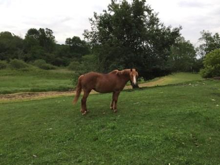 Chloe by the apple tree.