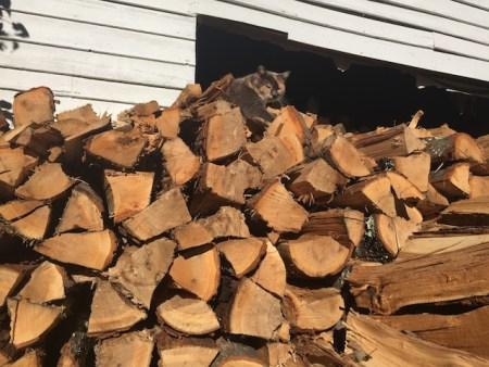 minnie-on-wood-pile