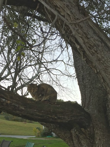 Flo in the Apple Tree
