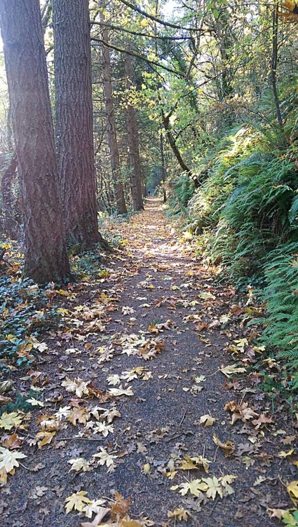 Iron Mountain Trail - Photo by Joy Dazey