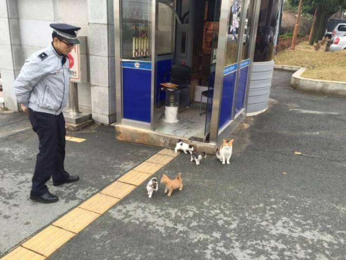 The cat family has their own living space. The police officers were present during the birth and cut the kittens' umbilical cords.