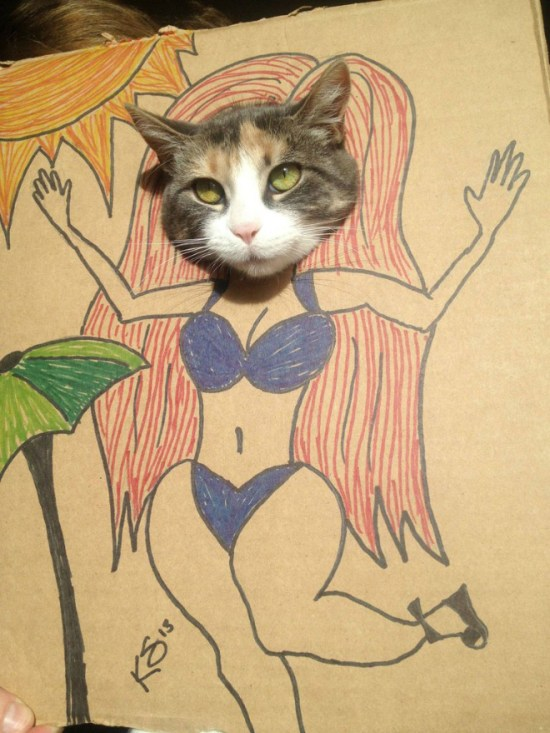 Cats vs. Cardboard Boxes 001