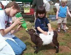 orange county petting zoo kids party rental los angeles rent pony san jose ponies sacramento children's parties