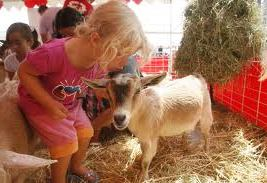 rent kids party pony orange county petting zoo rental los angeles children's party sacramento san jose ponies