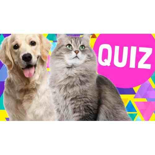Medium Crop Of What Dog Are You Quiz