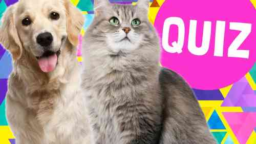 Medium Of What Dog Are You Quiz