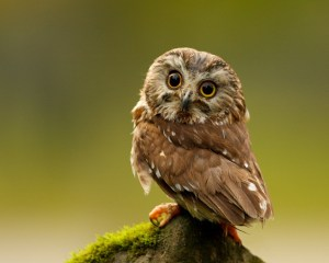 25+ Attractive And Smart Owl Pictures