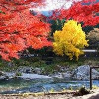 Japan_maple07