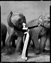 The iconic 1955 photo of Dovima with elephants in a Dior evening dress