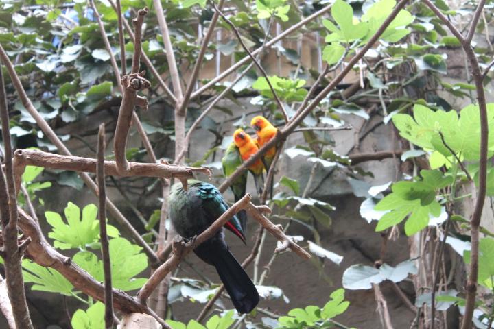 birdkingdom14