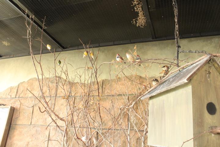 birdkingdom15