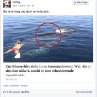 Facebook Link-Posts optimieren: Es gibt mehr als das Vorschaubild.