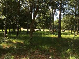 Gated Community-5 Acre Lot with Open Builder