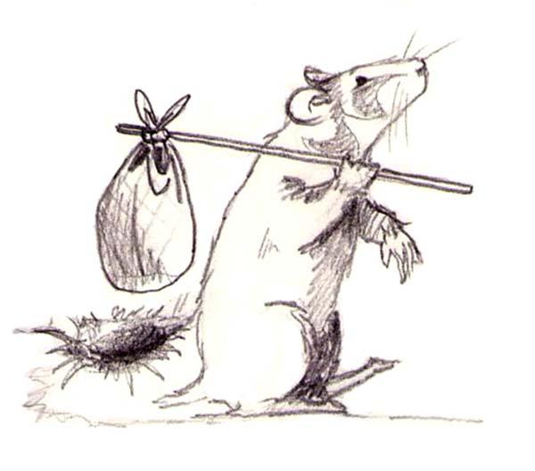 grand hamster alsace terrier recherche