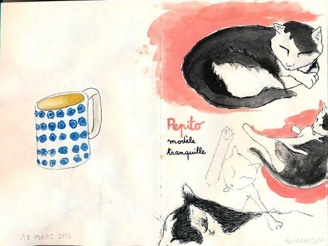 Pepito – Chat modèle