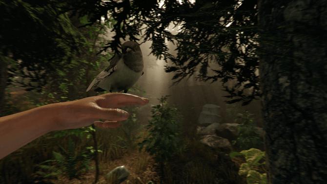 the-forest-bird