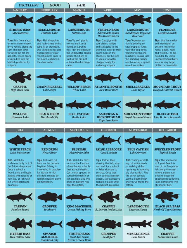 North Carolina Saltwater Fish ID Chart http://www.gameandfishmag.com