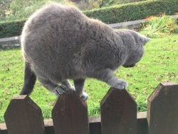 cat-on-fence