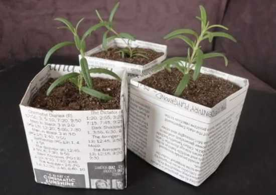 newspaper pots for seedlings