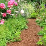 How To Make an Accessible Garden