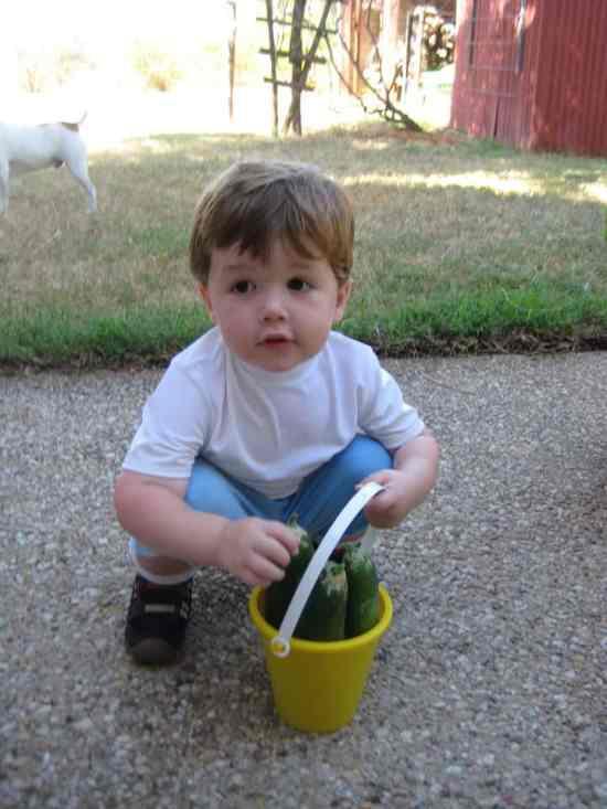 kid with garden harvest of zucchini