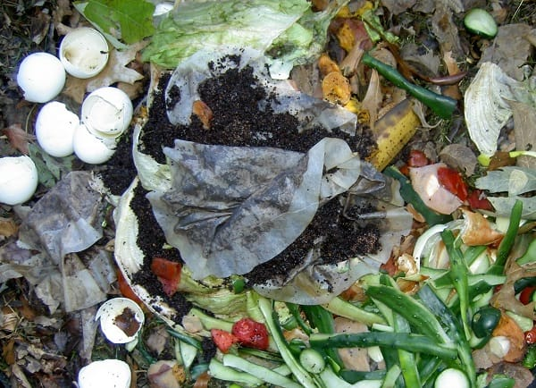 Troubleshooting the Compost Pile