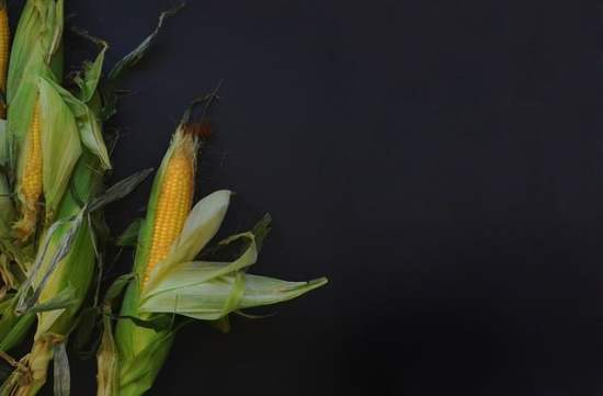 Preventing Corn Earworms