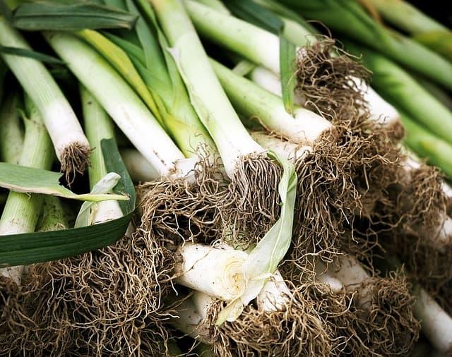Onion Alternatives to Grow in the Garden