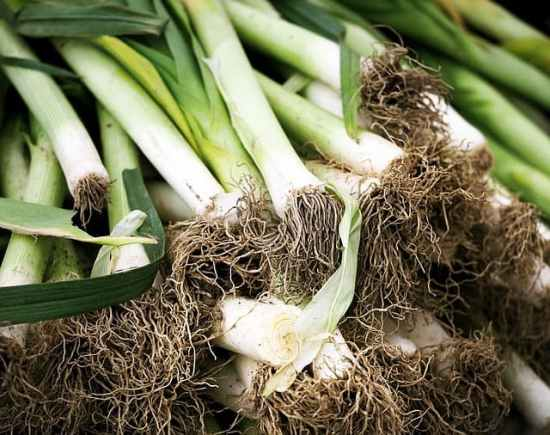 Growing onion alteratives