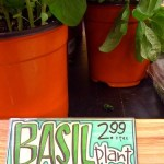 Buy Garden Plants From the Grocery Store
