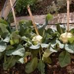 Vegetable Gardening Basics for Beginners