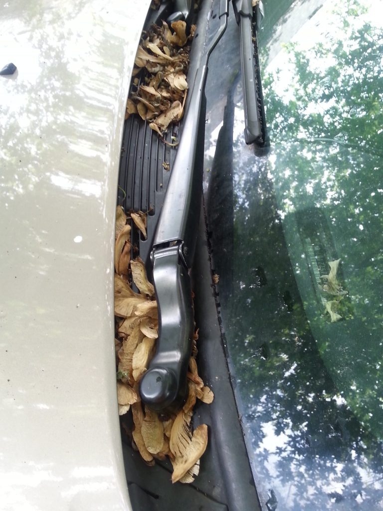 Maple Keys under car wipers