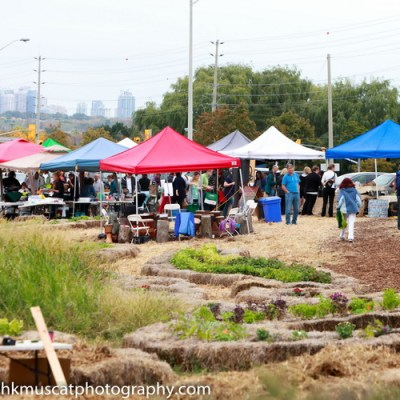 Backyard Farm & Market Opening Day