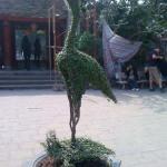 pflanzentiere-04-hanoi