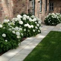Hortensien im Garten