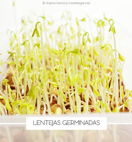 Lentejas germinadas - Cómo cocinar con legumbres - GastronomiaVegana.org