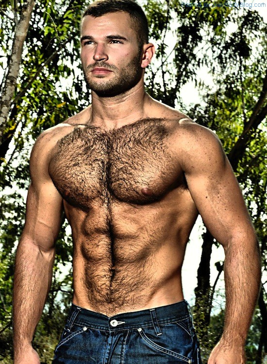 Handsome chested men hairy young