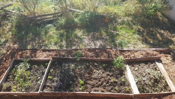 garden-and-mulch